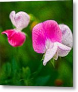 Sweet Pea Blossoms Metal Print