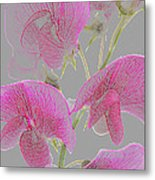 Sweet Pea Flowers Converted To Coloured Pencil Drawing Metal Print