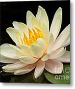 Sweet Peach Water Lily Metal Print