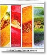Sweet Pepper Watercolor Metal Print