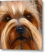 Sweet Silky Terrier Portrait Metal Print