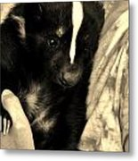 Sweet Sleepy Skunk Metal Print