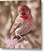 Sweet Songbird Metal Print