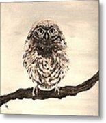 Sweetest Owl Metal Print