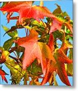 Sweetgum Leaves In Autumn Metal Print