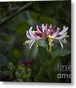 Sweetly Scented. Metal Print