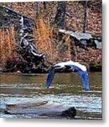 Sweetwater Heron In Flight Metal Print