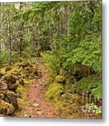 Swim Lake Trail Metal Print