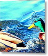 Some Ducks Are Just Happily Swimming With Their Team  Metal Print