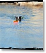 Swimmer In The Truckee River Metal Print