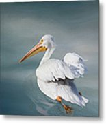 Swimming Away Metal Print