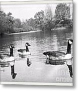 Swimming Geese-  Vintage Photograph Metal Print