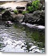 Swimming Hippo Metal Print