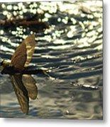 Swimming In The Light Metal Print
