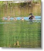 Swimming Lessons 1 Metal Print by Tanya Jacobson-Smith
