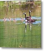 Swimming Lessons 2 Metal Print by Tanya Jacobson-Smith