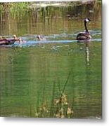 Swimming Lessons 3 Metal Print by Tanya Jacobson-Smith