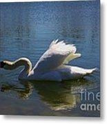 Swimming Swan Metal Print
