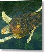 Swimming Turtle Metal Print