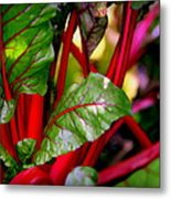Swiss Chard Forest Metal Print