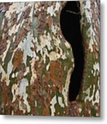 Sycamore Camouflage Metal Print