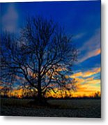 Sycamore Sunset Metal Print