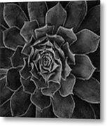 Symmetrical Succulent Metal Print