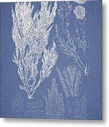 Symphocladia Linearis Metal Print