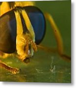 Syrphid Eyes And Antennae Metal Print