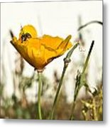 Syrphid Fly And Poppy 2 Metal Print