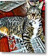 Tabby Cat On Newspaper - Catching Up On The News Metal Print
