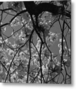 Tabebuia Tree 1 Metal Print