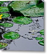 Tadpole Haven Metal Print by Frozen in Time Fine Art Photography