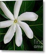 Tahitian Gardenia Metal Print