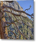 Tahquitz And The Pine Metal Print