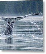 Tail Of Humpback Whale Metal Print