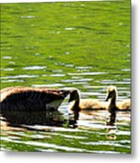 Tail Shade Metal Print