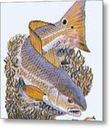 Tailing Redfish Metal Print