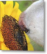 Take Time To Smell The Sunflowers Metal Print