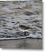 Taking A Walk Metal Print