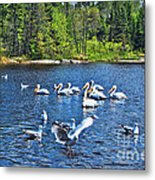Taking Flight In Ontario Metal Print