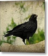 Blackbird Is Taking It All In Metal Print