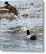 Taking Wing Metal Print