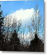 Tall Birch Metal Print