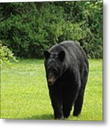 Tall Blackbear Metal Print