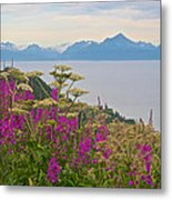 Tall Fireweed And Cow Parsnip Over Cook Inlet Near Homer- Ak Metal Print