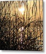 Tall Grass 1 Metal Print