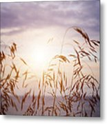 Tall Grass At Sunset Metal Print