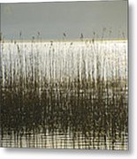 Tall Grass On Lough Eske - Donegal Ireland Metal Print