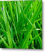 Tall Green Grass Metal Print